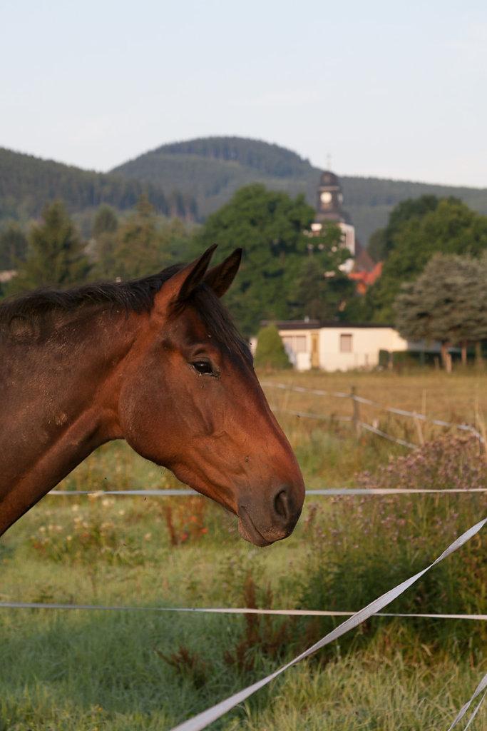 Pferd auf den Wiesen ganz in der Nähe.